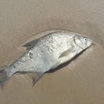 fish-1114988_640